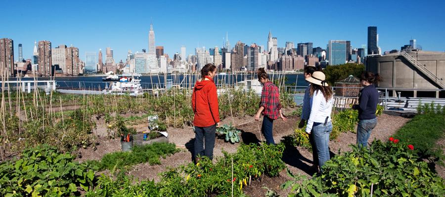 An Urban World Calls for Urban Agriculture