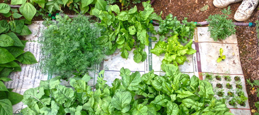 Nourishing Cities with Urban Micro Gardens