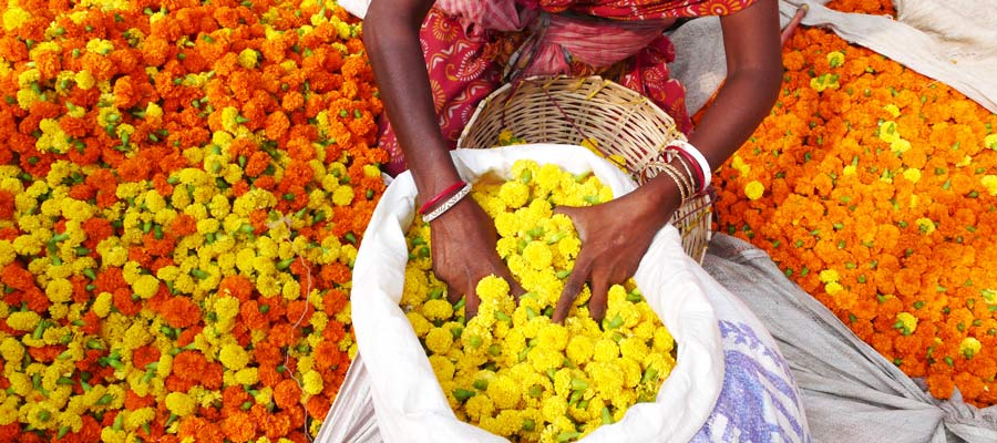 Microfinancing: Alleviating Poverty Sustainably