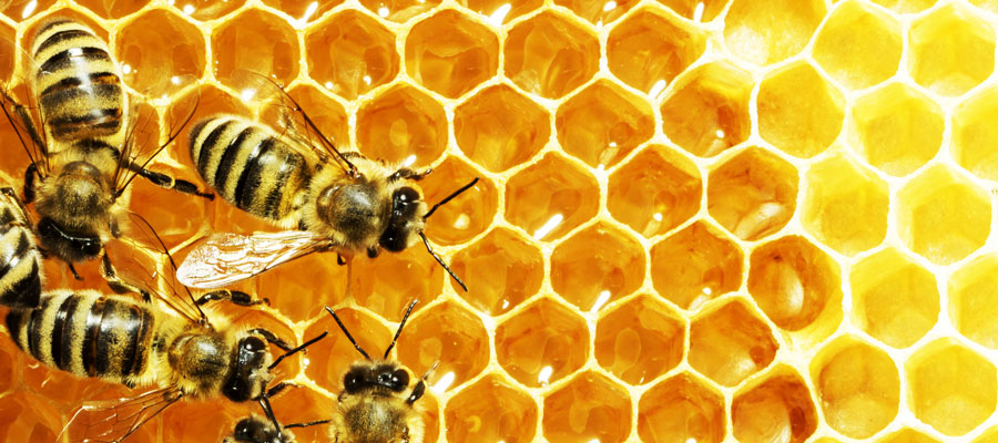 Buzzing Rooftops: The Ins and Outs of Urban Beekeeping