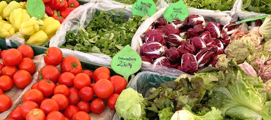 Down to the Roots: How Cities Are Building Local & Sustainable Food Systems