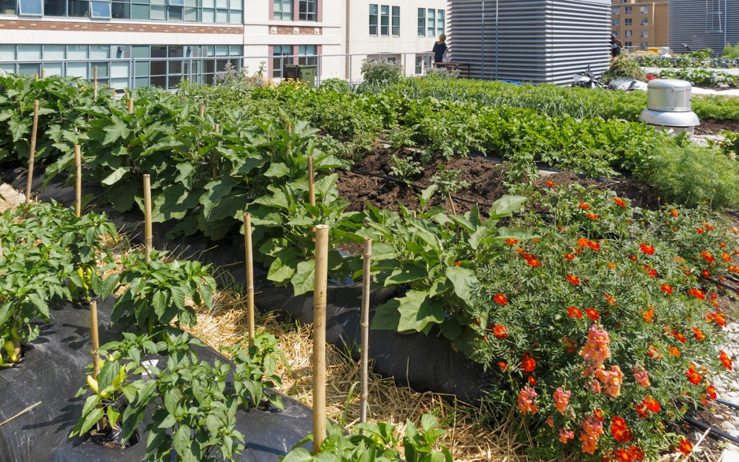 Sustainable Cities Require Urban Agriculture